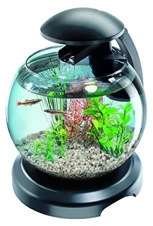 aquarium pour poisson