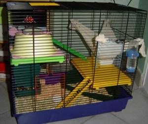 cage pour rat domestique