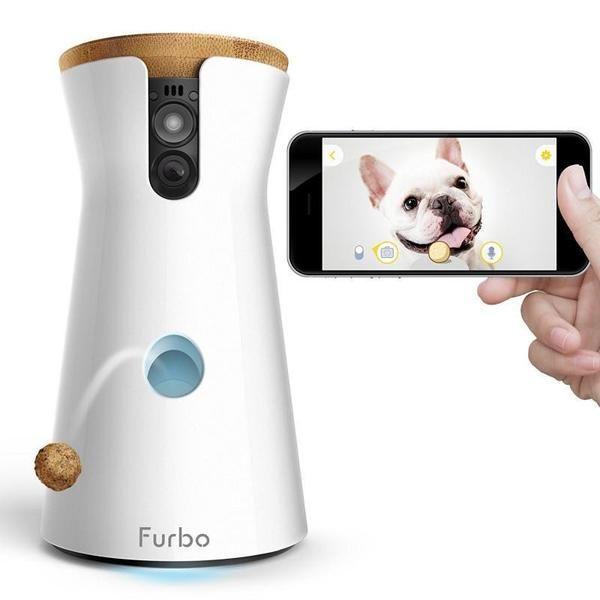 camera pour chien