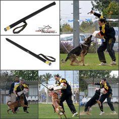 equipement canin