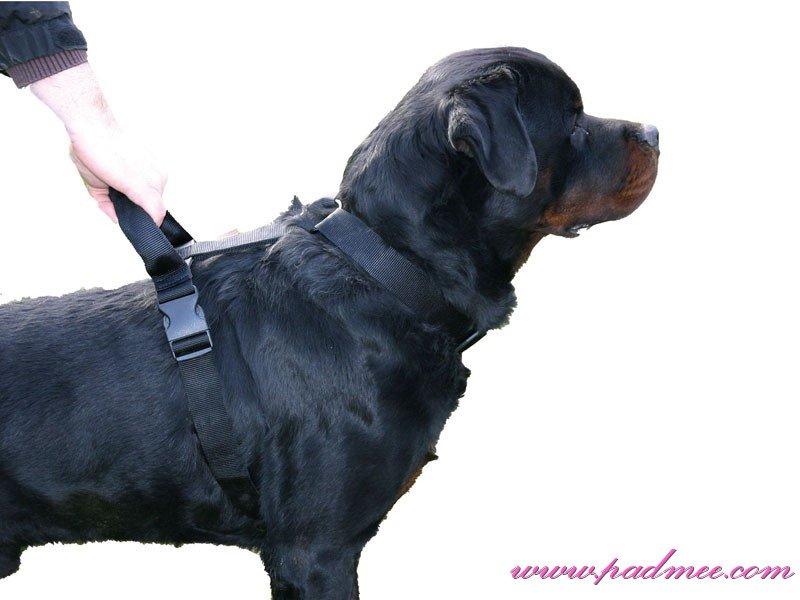 harnais gros chien