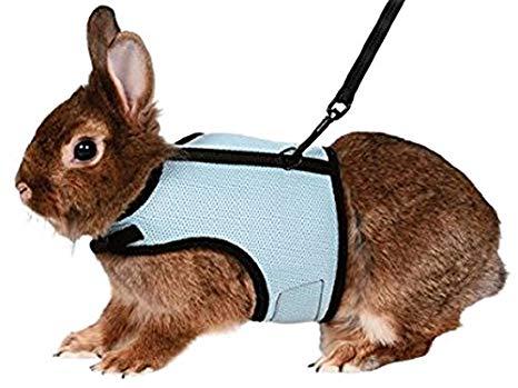 harnais pour lapin